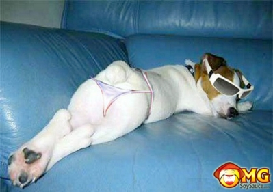 funny-dog-bikini